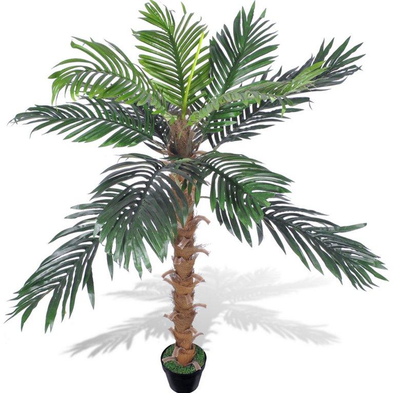 Миниатюрная кокосовая пальма