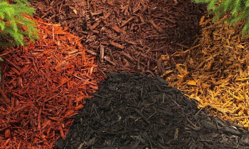 Мульчирование почвы: что это такое, польза мульчирования и виды мульчи