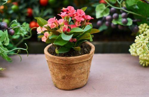 Чем подкармливать комнатные растения в домашних условиях. Натуральные удобрения